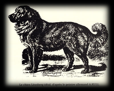 The Ideal Leonberger, by Albert Kull