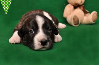 Мальчик Тигр, 2,5 недели