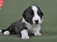 Мальчик Тигр - 3,5 недели
