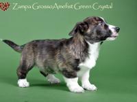 Zampa Grosso Amefist Green Crystal - 2 месяца