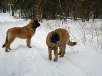 Я и мой брат Коко-Чоко! Нам по 7,5 мес.